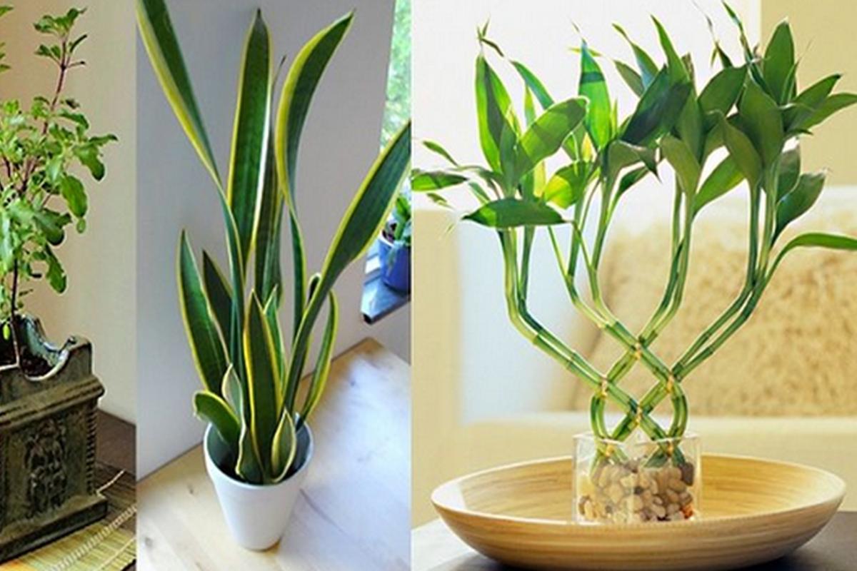 9 plantas que atraen energ a positiva a su hogar y lugar - Energias positivas y negativas ...